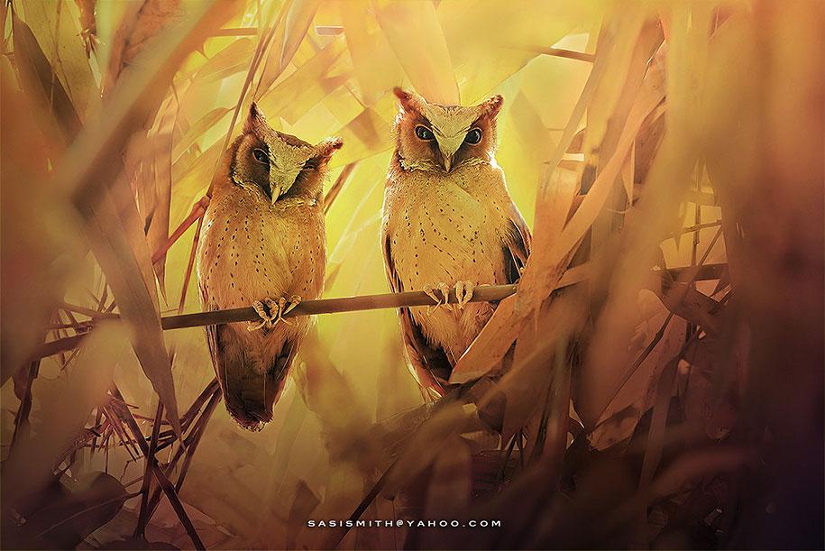 owl-photography-sasi-smit-17