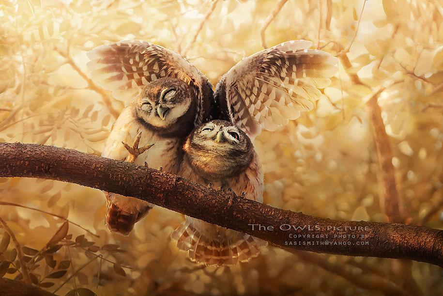 owl-photography-sasi-smit-3