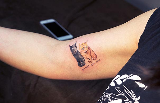 cat-tattoos-trend-illegal-parlors-south-korea-18