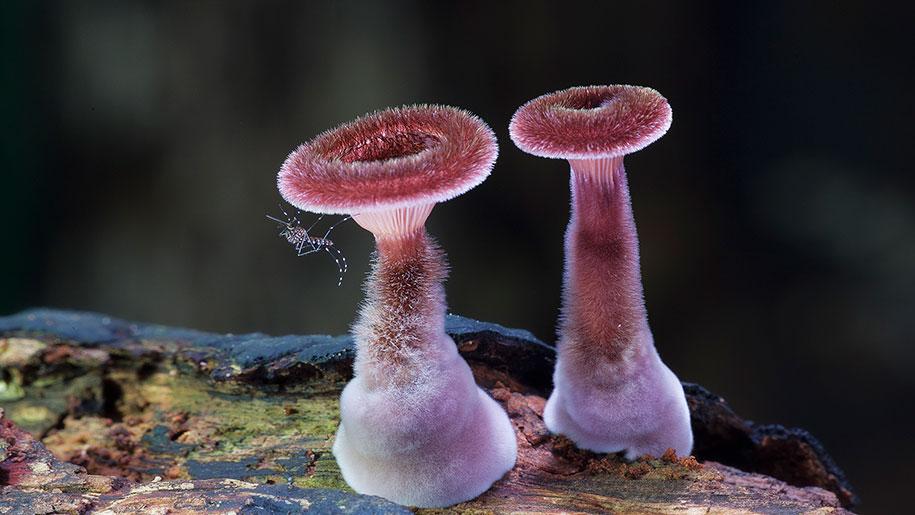 exotic-australian-mushroom-photography-steve-axford-13