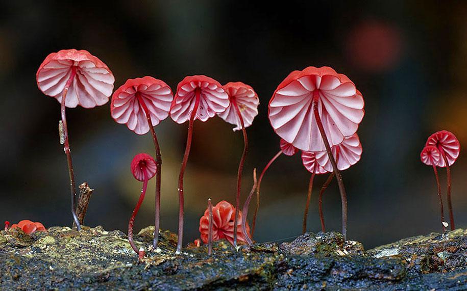 exotic-australian-mushroom-photography-steve-axford-73