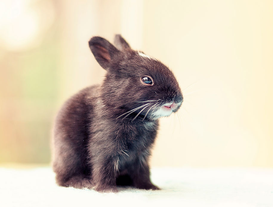 cute-bunny-baby-growing-up-ashraful-arefin-1