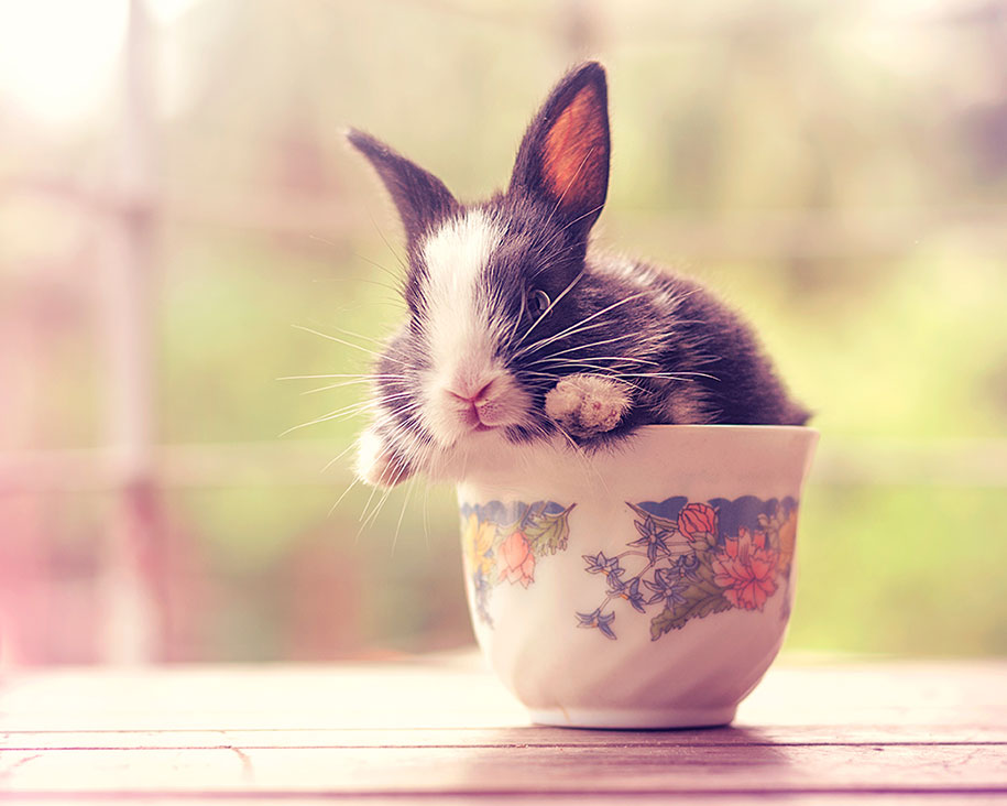 cute-bunny-baby-growing-up-ashraful-arefin-15