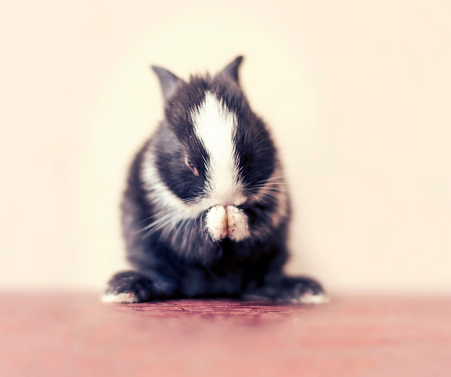 cute-bunny-baby-growing-up-ashraful-arefin-4