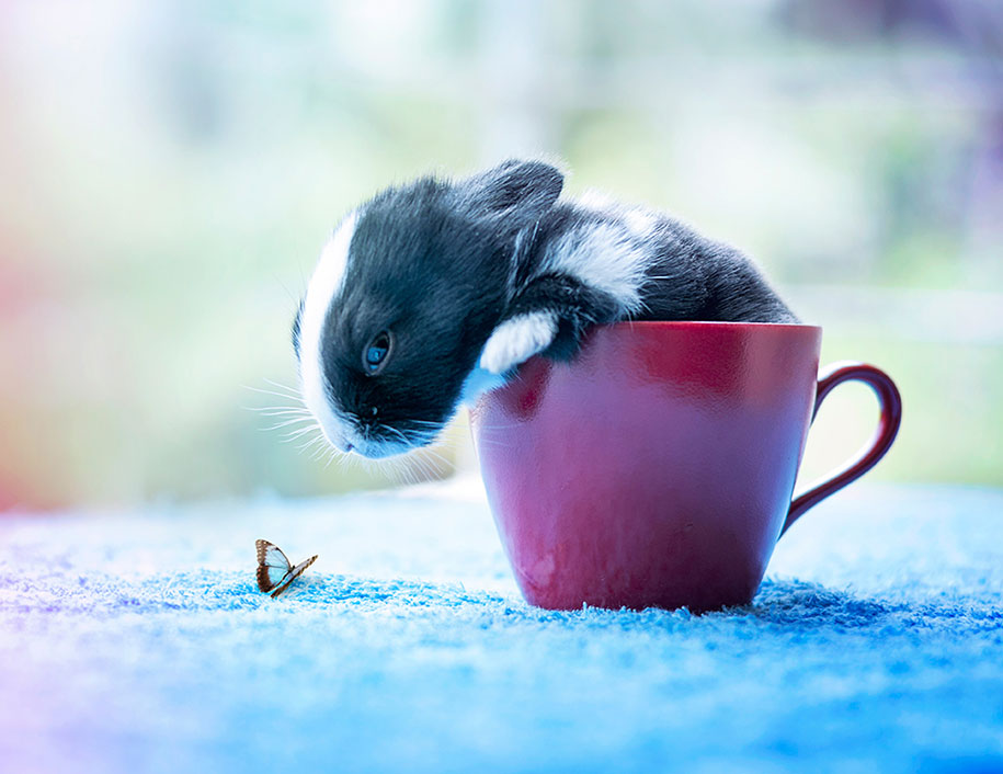cute-bunny-baby-growing-up-ashraful-arefin-6