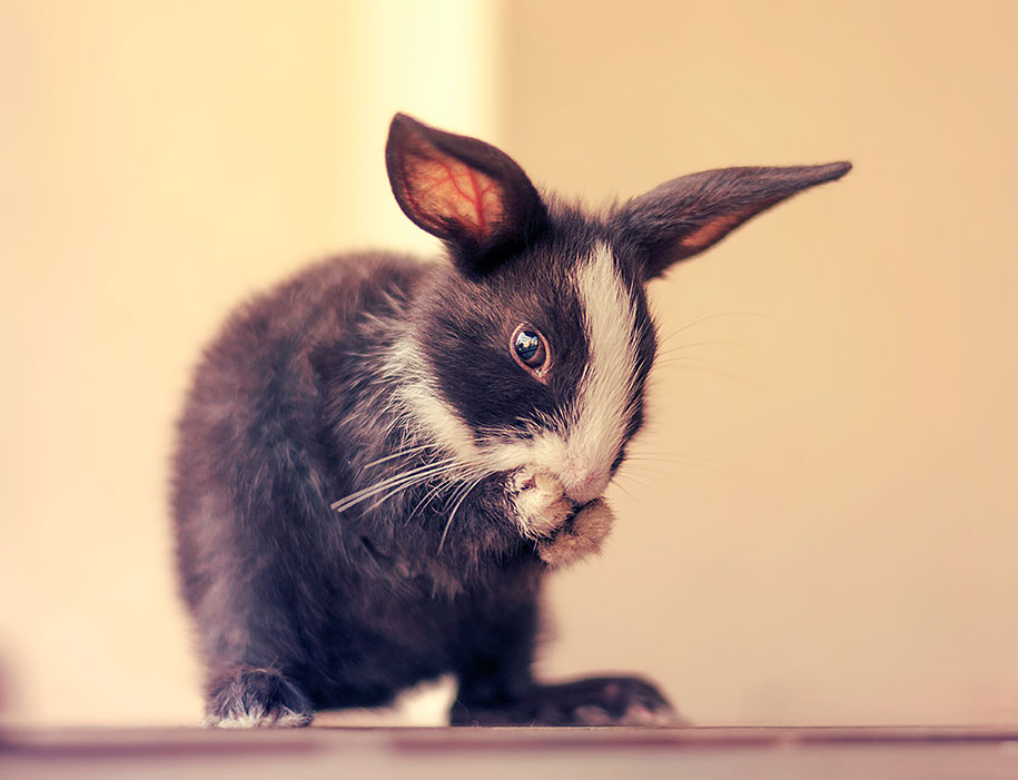 cute-bunny-baby-growing-up-ashraful-arefin-8