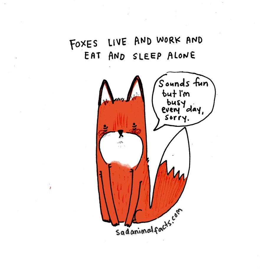 cute-illustrations-drawings-sad-animal-facts-brooke-barker-26