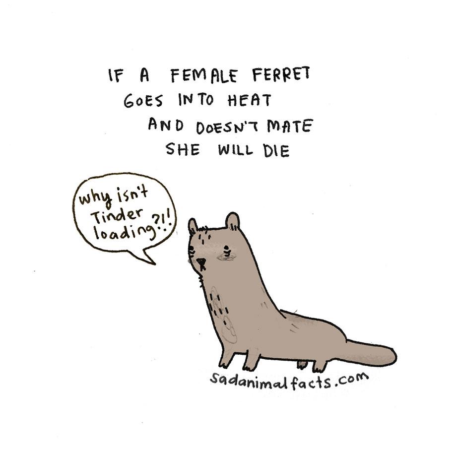 cute-illustrations-drawings-sad-animal-facts-brooke-barker-27