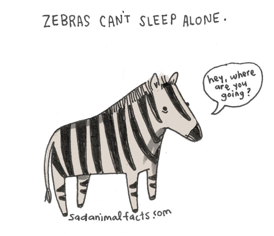 cute-illustrations-drawings-sad-animal-facts-brooke-barker-31