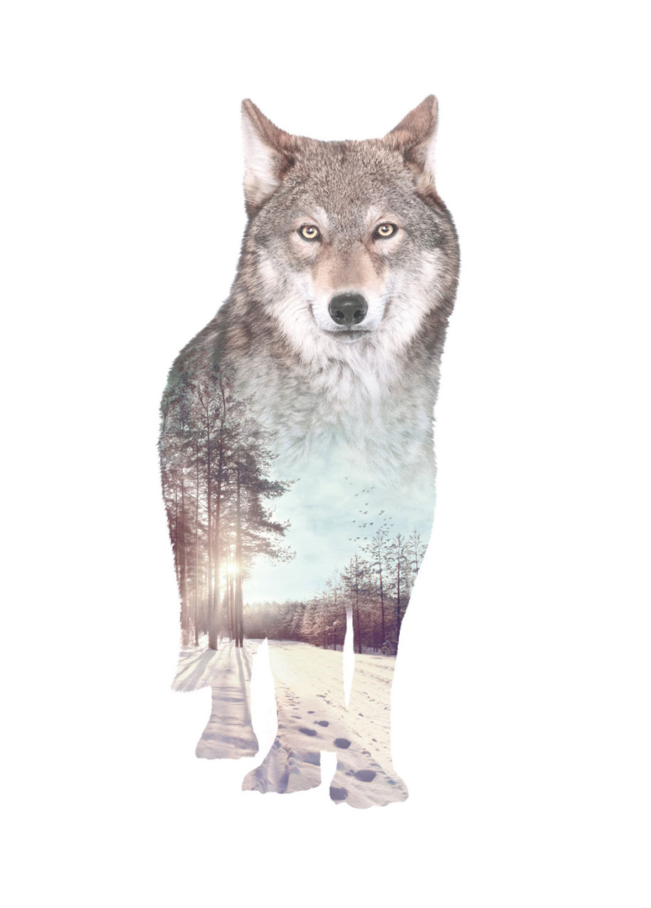 double-exposure-animal-portraits-faunascapes-whatwedo-denmark-13