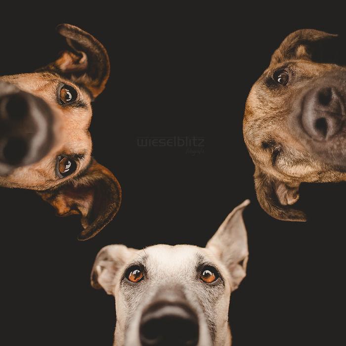 funny-playful-expressive-dog-portraits-elke-vogelsang-15