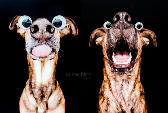 funny-playful-expressive-dog-portraits-elke-vogelsang-2