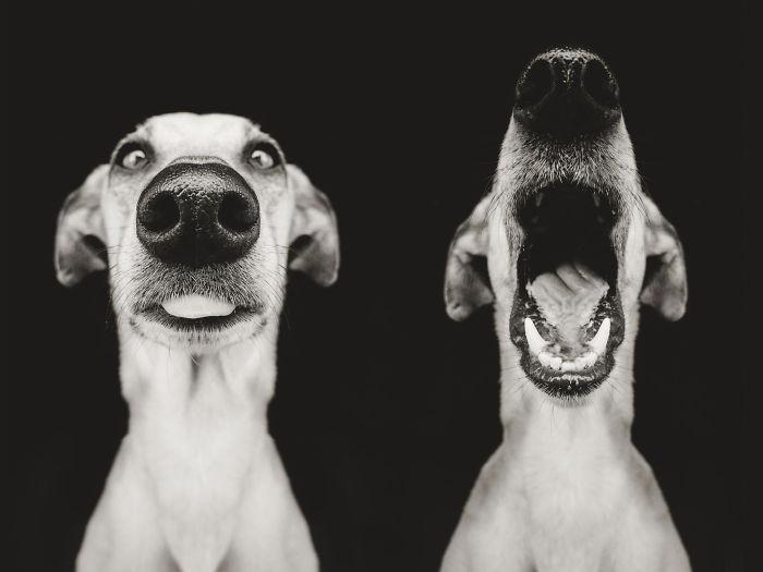 funny-playful-expressive-dog-portraits-elke-vogelsang-8