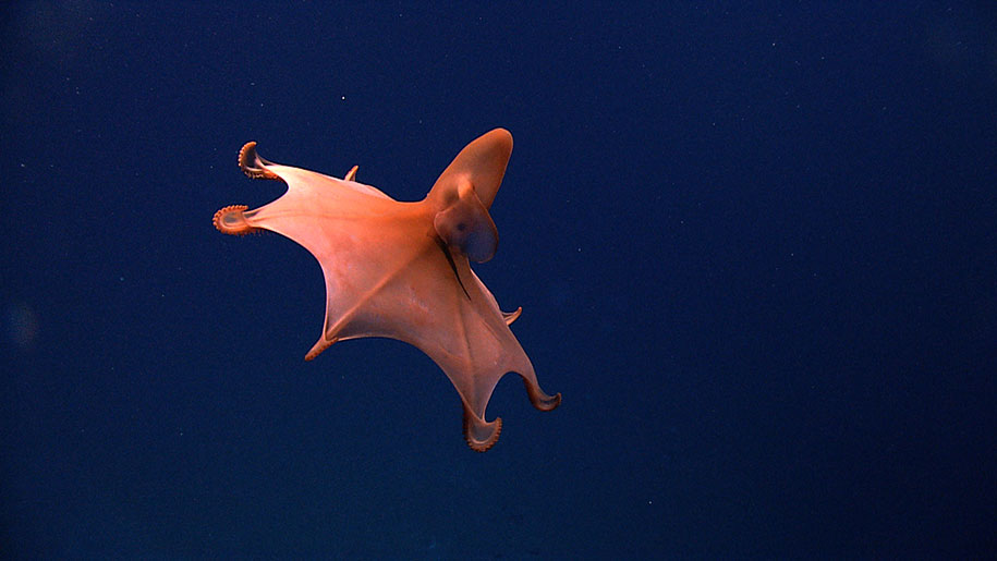 new-species-deep-sea-creatures-puerto-rico-trench-19