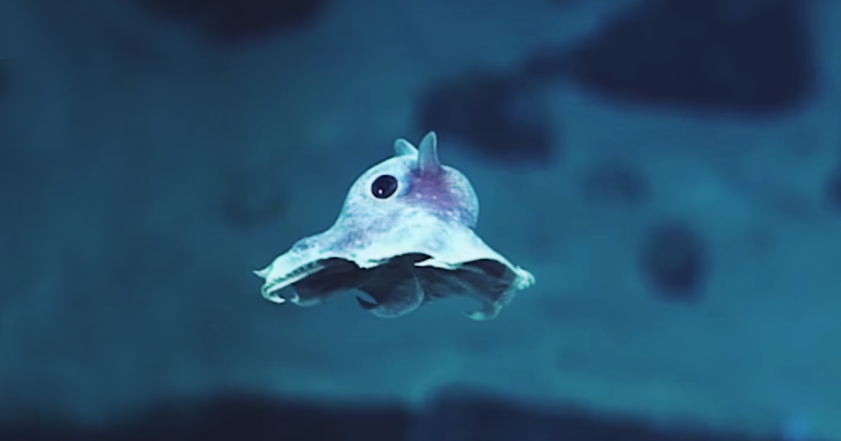 Weird newly discovered sea creatures captured on camera for Weird deep sea fish