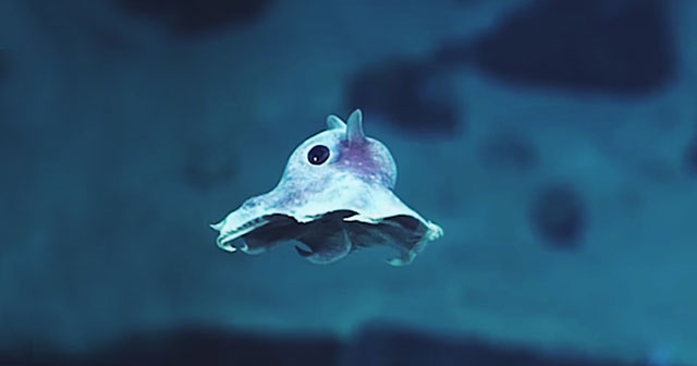 Weird Newly Discovered Sea Creatures Captured On Camera