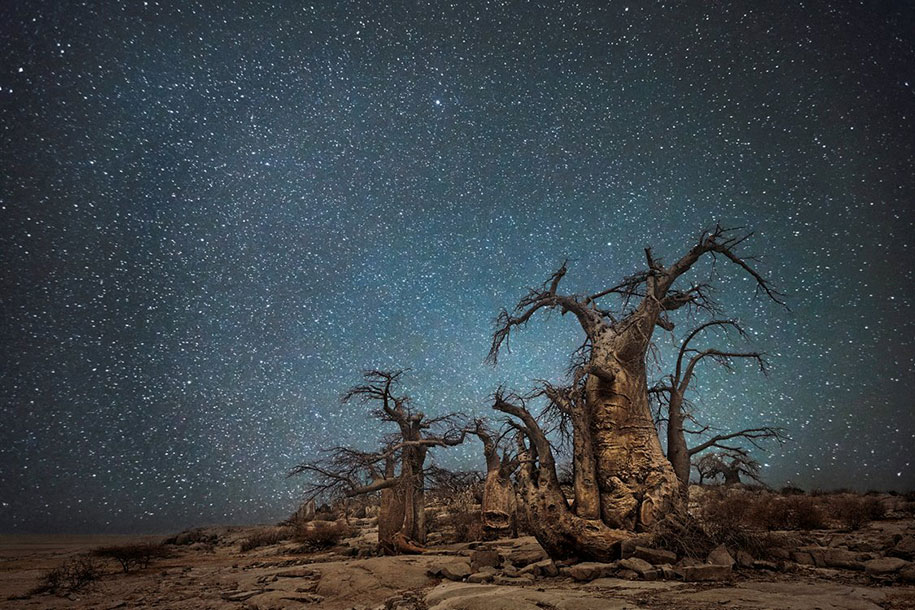 oldest-trees-photography-starlight-diamond-nights-beth-moon-10