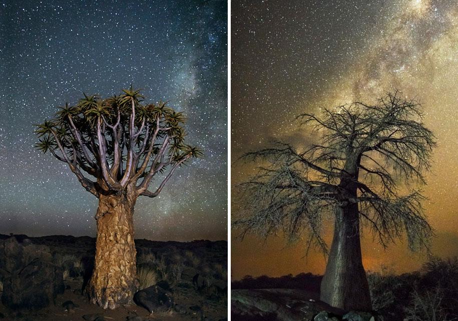 oldest-trees-photography-starlight-diamond-nights-beth-moon-11