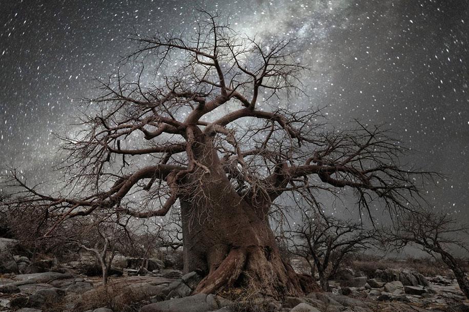 oldest-trees-photography-starlight-diamond-nights-beth-moon-2