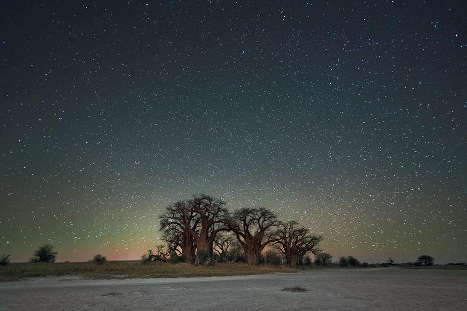 oldest-trees-photography-starlight-diamond-nights-beth-moon-3