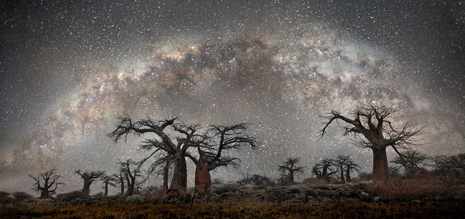 oldest-trees-photography-starlight-diamond-nights-beth-moon-8