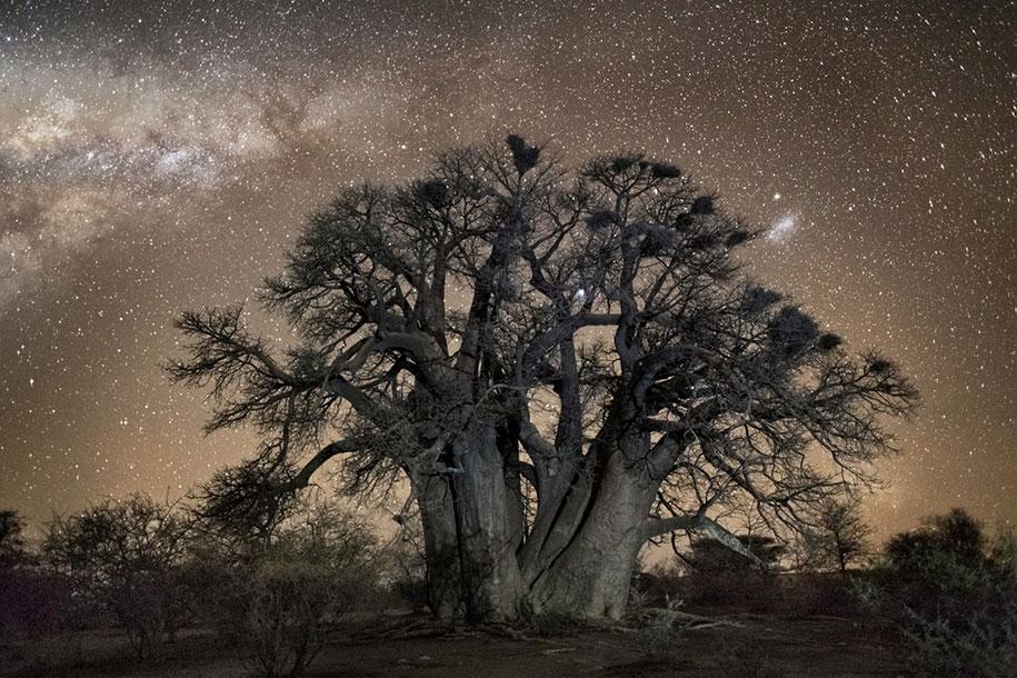 oldest-trees-photography-starlight-diamond-nights-beth-moon-9