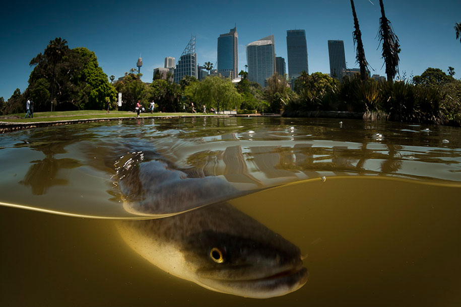 surface-half-underwater-photography-over-under-matty-smith-10