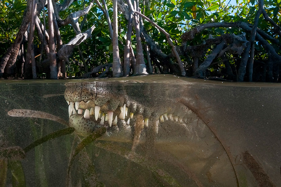 surface-half-underwater-photography-over-under-matty-smith-11