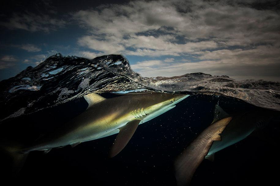 surface-half-underwater-photography-over-under-matty-smith-12