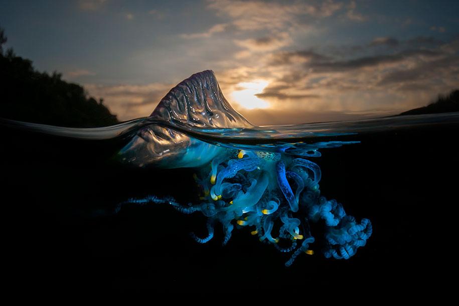 surface-half-underwater-photography-over-under-matty-smith-13