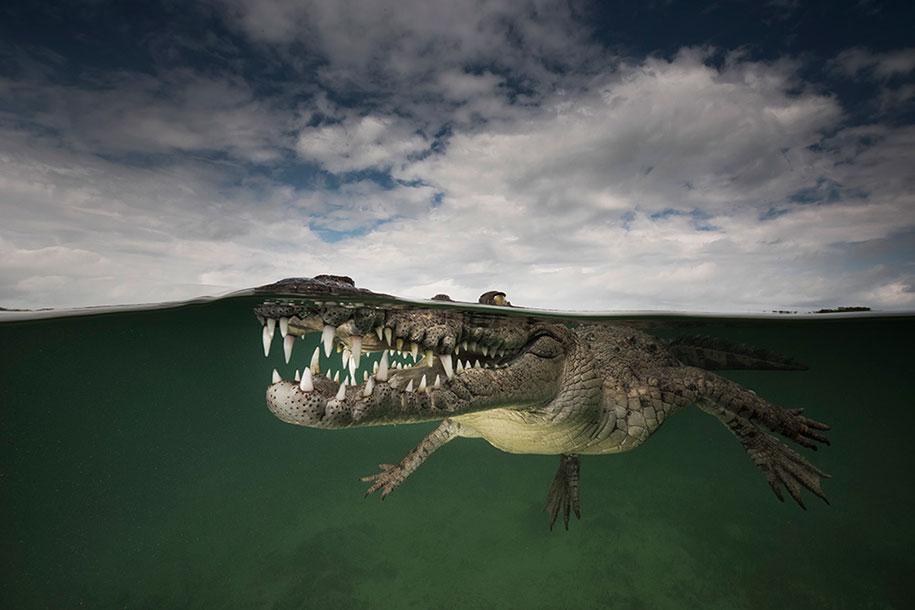 surface-half-underwater-photography-over-under-matty-smith-15