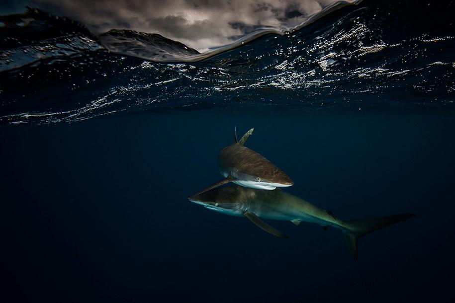 surface-half-underwater-photography-over-under-matty-smith-16