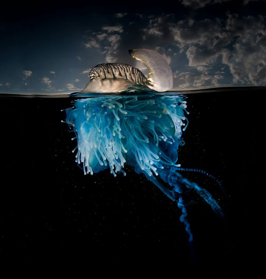surface-half-underwater-photography-over-under-matty-smith-17