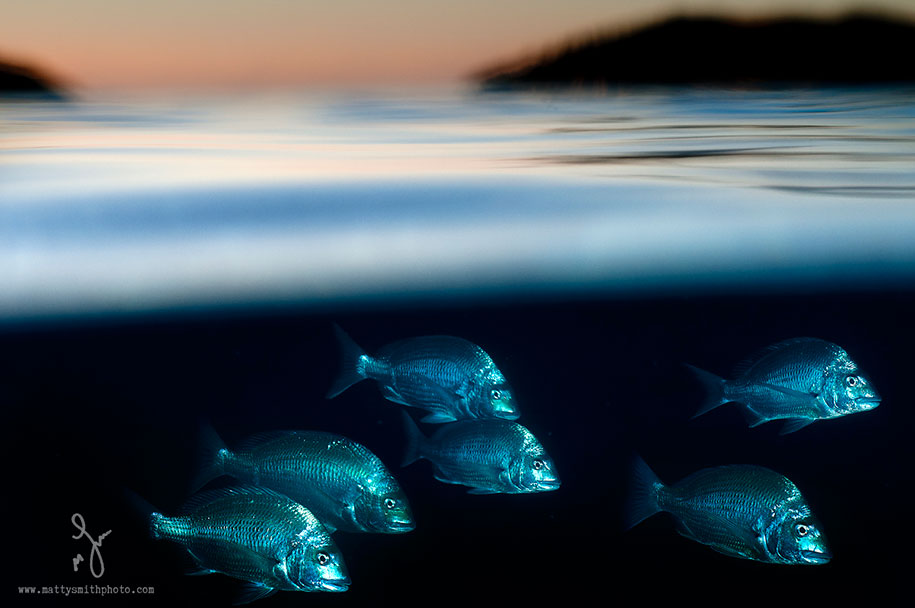 surface-half-underwater-photography-over-under-matty-smith-20