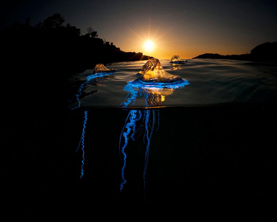 surface-half-underwater-photography-over-under-matty-smith-4