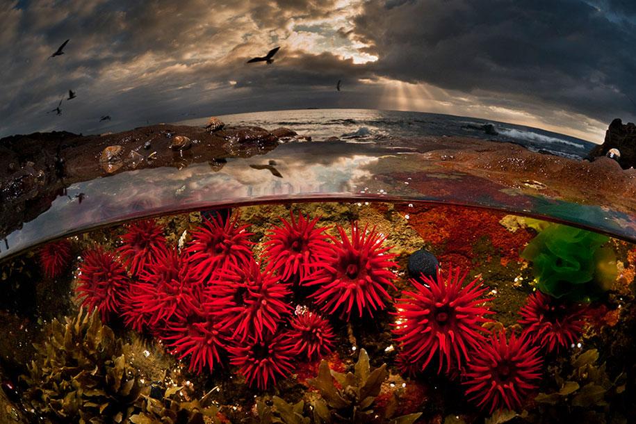 surface-half-underwater-photography-over-under-matty-smith-8