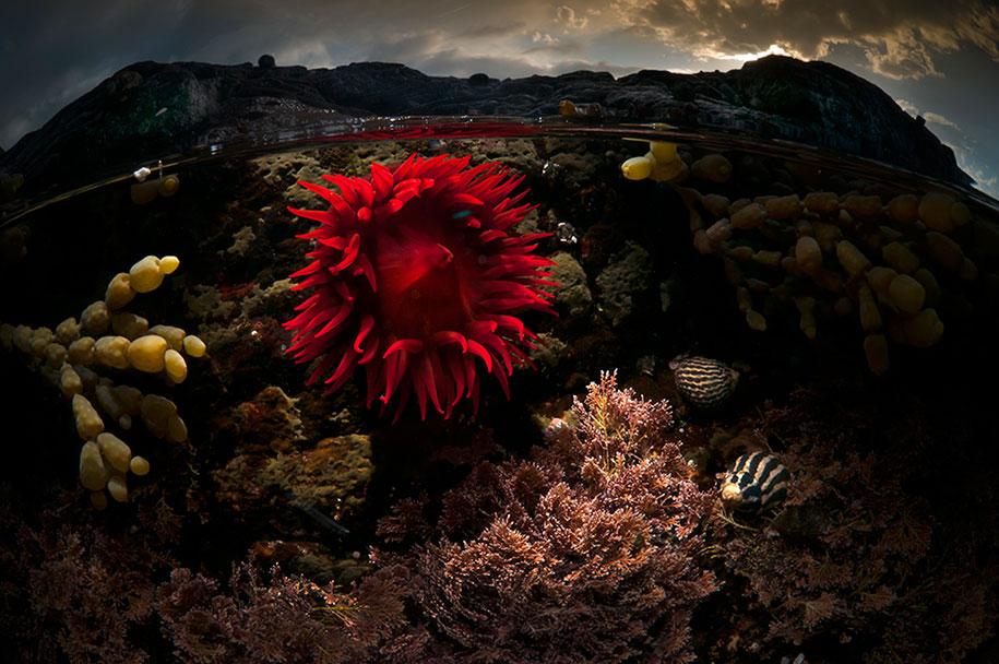 surface-half-underwater-photography-over-under-matty-smith-9
