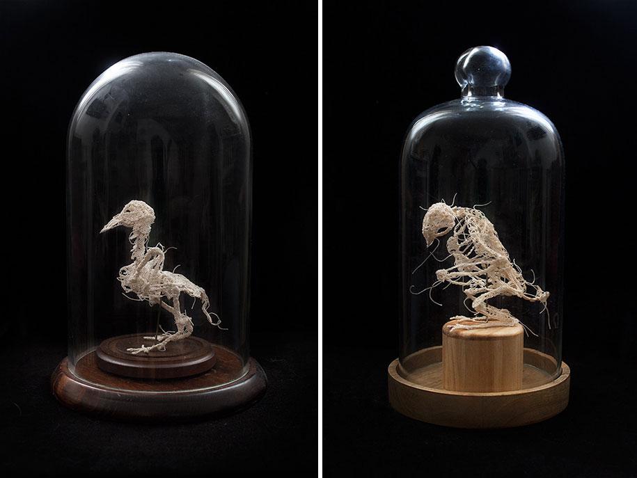 disturbing-crocheted-yarn-glue-animal-skeletons-caitlin-mccormack-12
