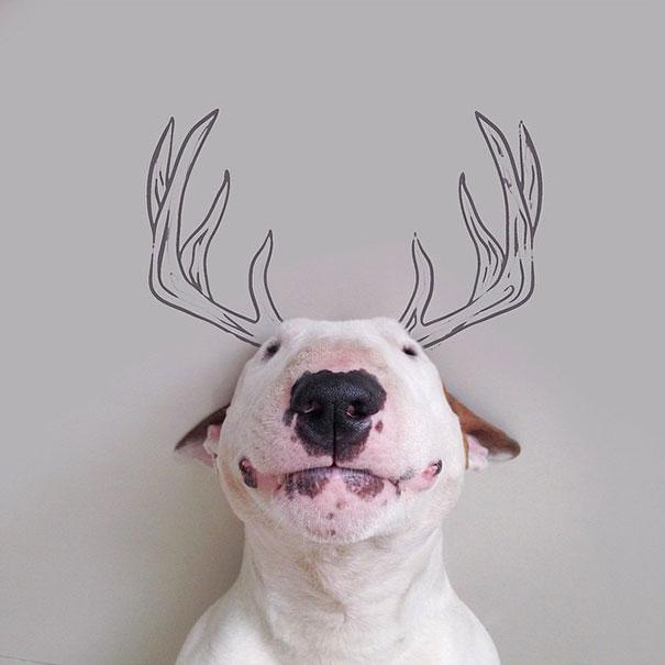 dog-interactive-illustrations-jimmy-choo-rafael-mantesso-7
