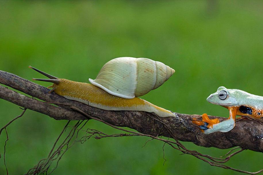 funny-animals-frog-riding-snail-kurito-afsheen-indonesia-3