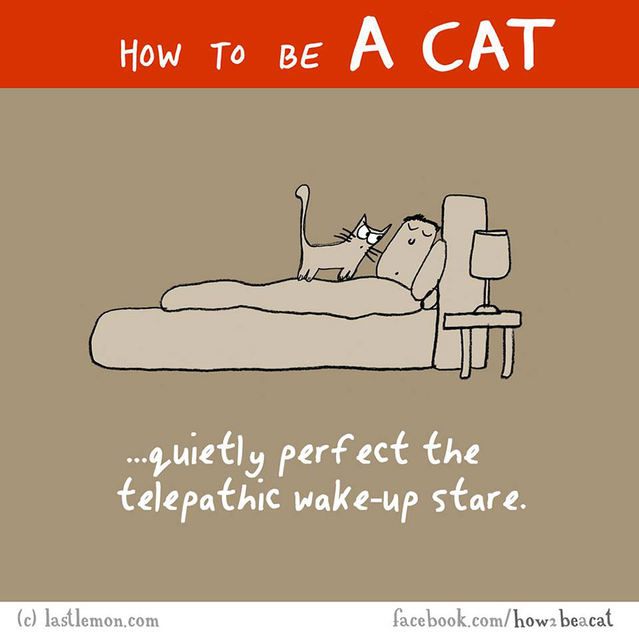 funny-illustration-guide-how-to-be-cat-lisa-swerling-ralph-lazar-20