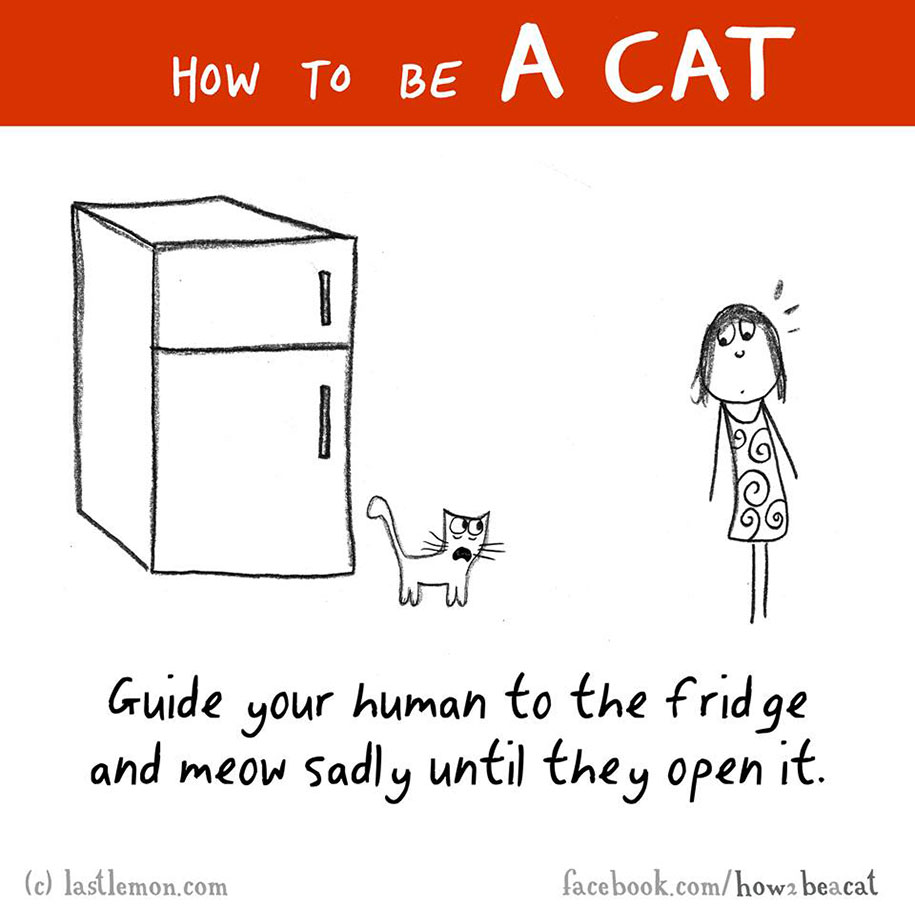 funny-illustration-guide-how-to-be-cat-lisa-swerling-ralph-lazar-23