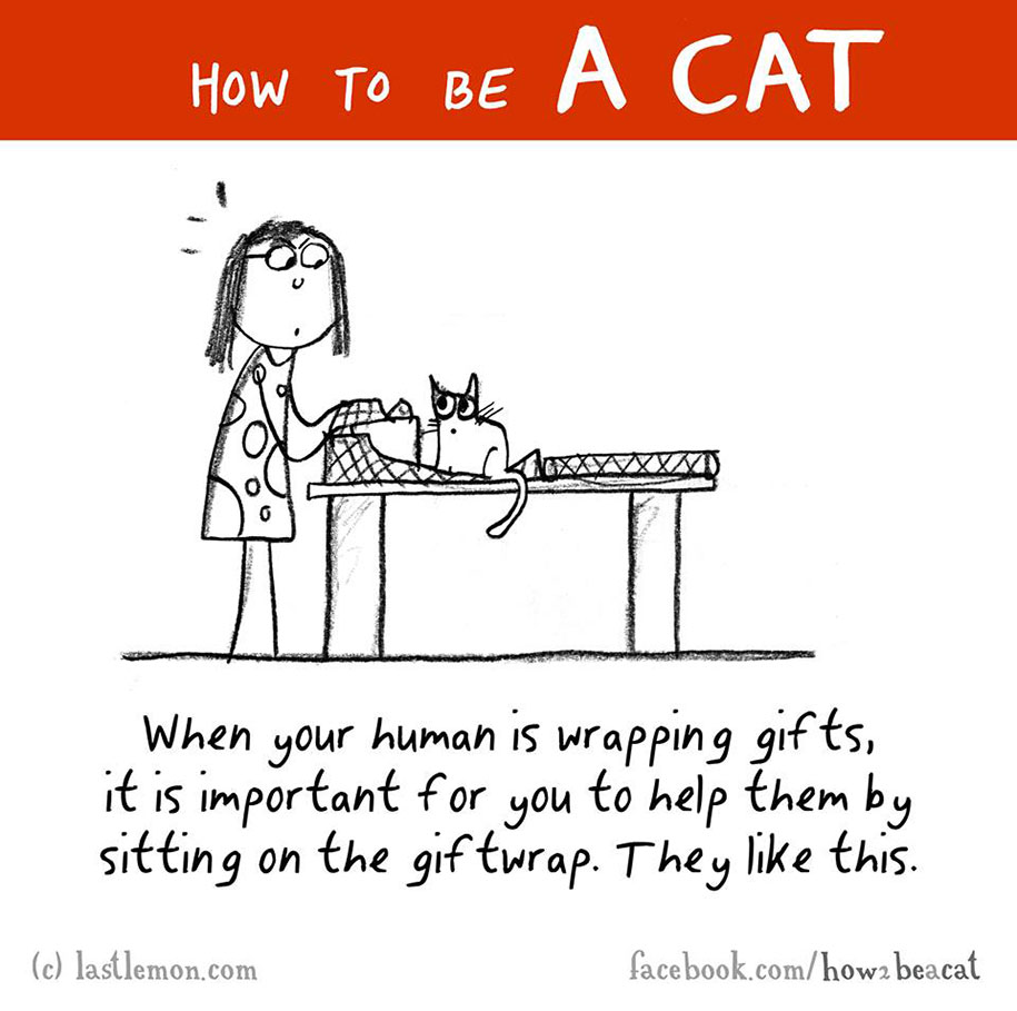 funny-illustration-guide-how-to-be-cat-lisa-swerling-ralph-lazar-41