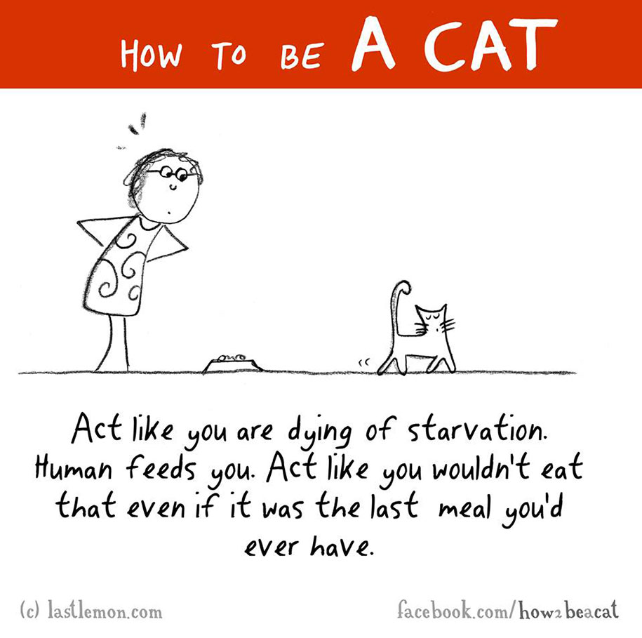 funny-illustration-guide-how-to-be-cat-lisa-swerling-ralph-lazar-42