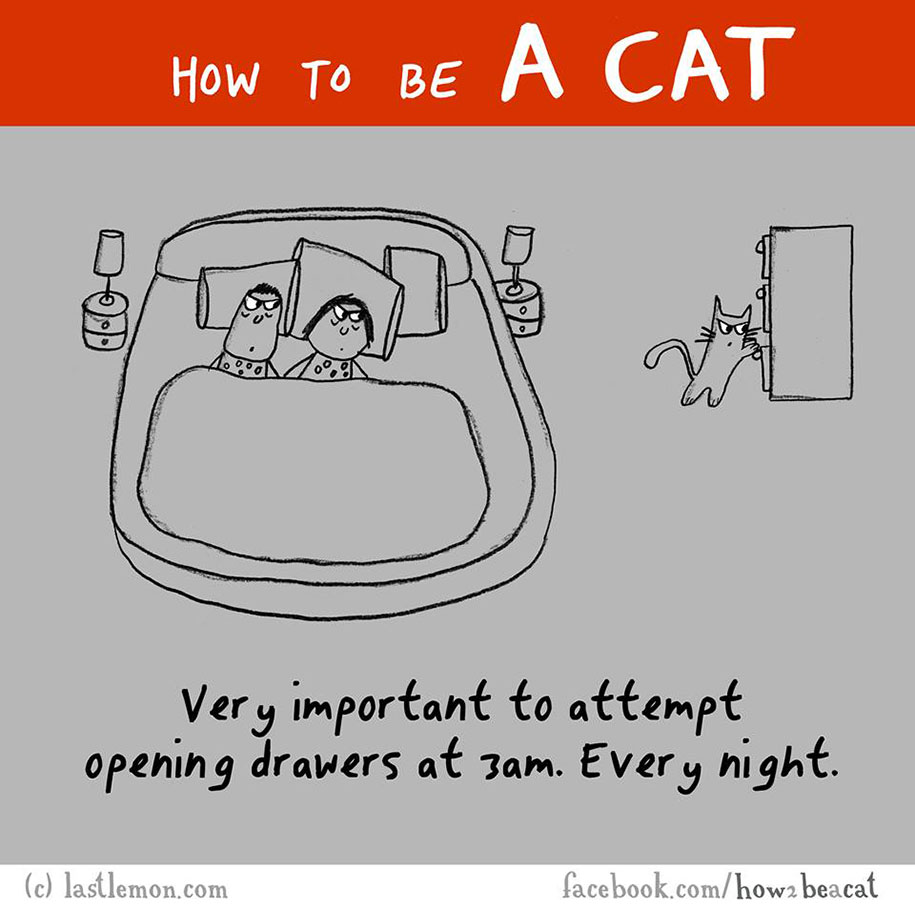 funny-illustration-guide-how-to-be-cat-lisa-swerling-ralph-lazar-51