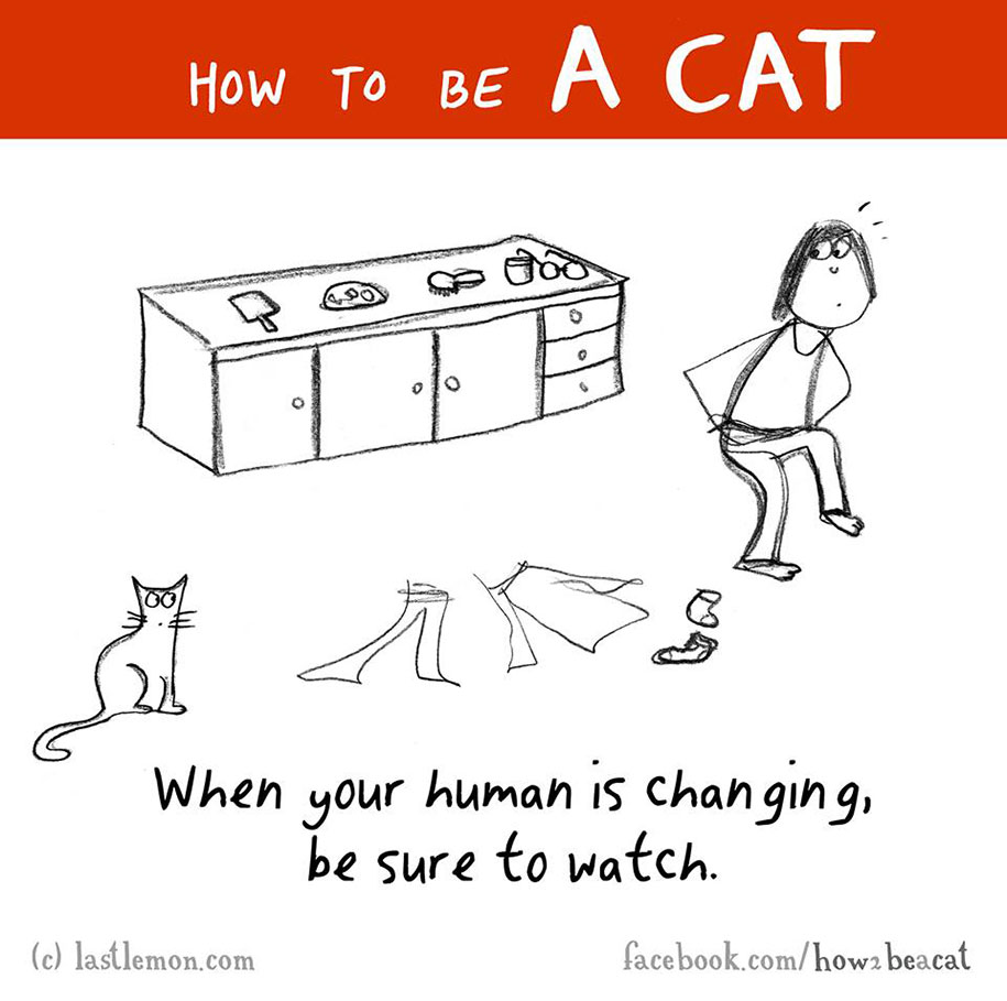 funny-illustration-guide-how-to-be-cat-lisa-swerling-ralph-lazar-8