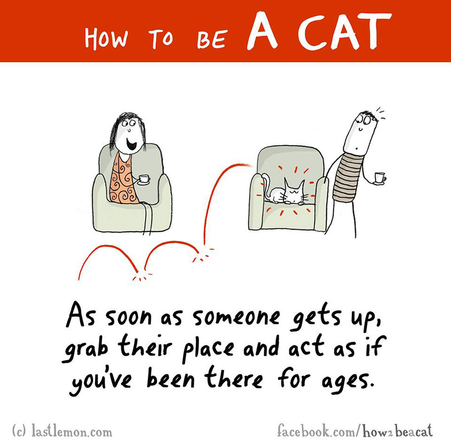 funny-illustration-guide-how-to-be-cat-lisa-swerling-ralph-lazar-82
