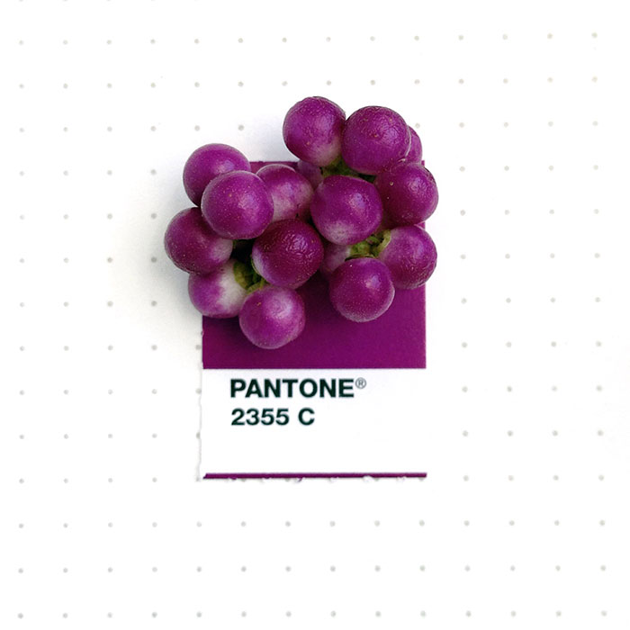 pantone-matches-tiny-pms-match-inka-mathew-39