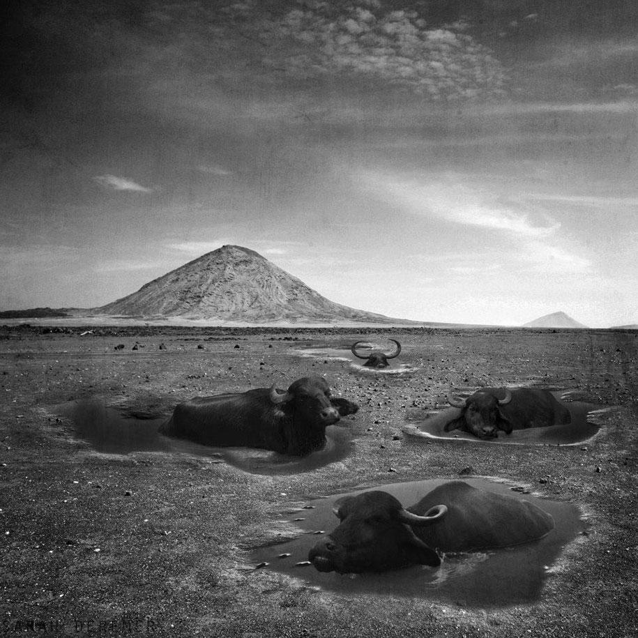 strange-animal-hybrids-surreal-experiments-sarah-deremer-10
