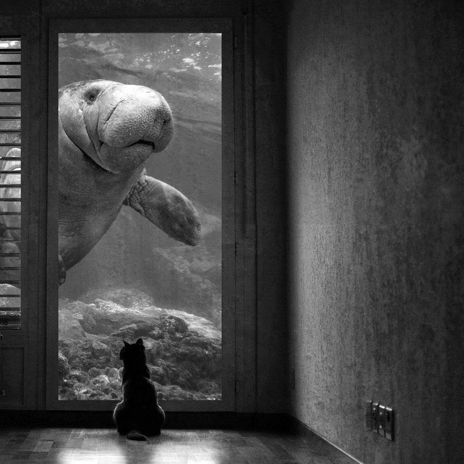 strange-animal-hybrids-surreal-experiments-sarah-deremer-7
